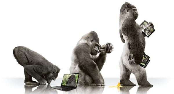 x600-x550-home-gorilla